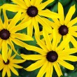 "Stock Photo: ""Yellow Flowers"""