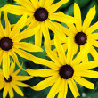 &quot;Yellow Flowers&quot; - Stock Photo