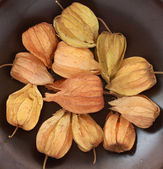 Chinese Lantern (Physalis) Fruit — Stock Photo