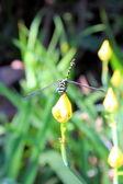 Dragonfly close up — Fotografia Stock