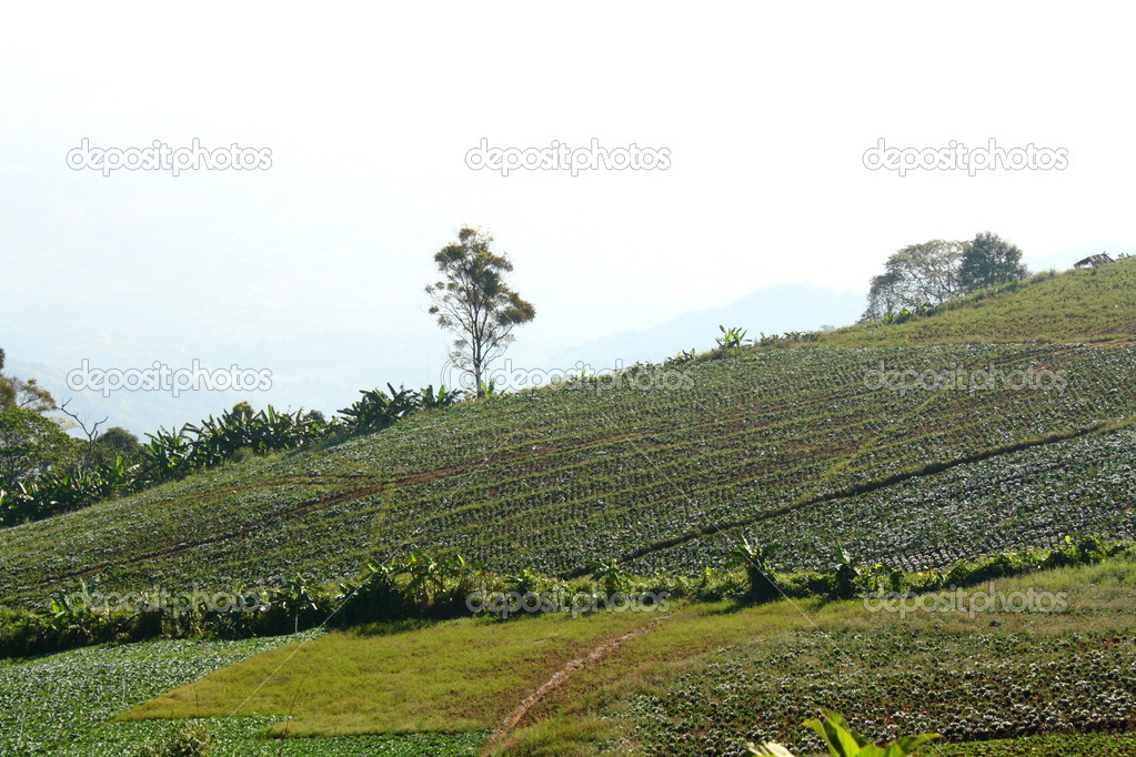 Green hills in thailand  Stock Photo #9602171