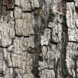 Royalty-Free Stock Photo: Tree bark background