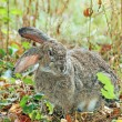 Rabbit at autumn grass — Stock Photo