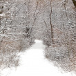 Winter forest road — Stock Photo #8593054