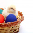 Easter Eggs & a Chick — Stock Photo
