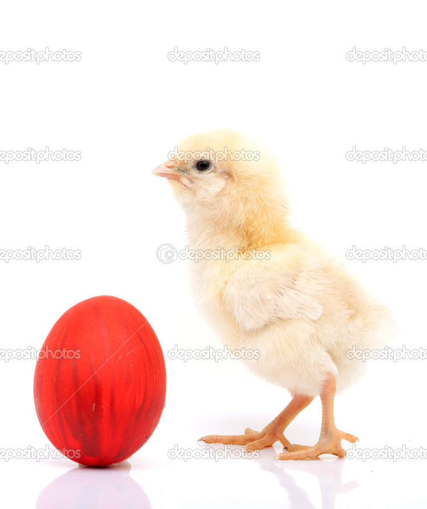 Vertical shot of a chick and red Easter egg on a white background — Stock Photo #9801219