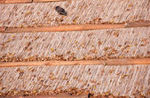 Roof made of dry reed — Stock Photo
