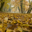 Fall foliage - autumn forest — Stock Photo