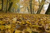 Fall foliage - autumn forest — Stock Photo
