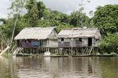 Aboriginal houses in the Amazon — Stock Photo