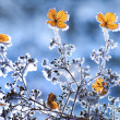 Winter flowers — Stock Photo #8494413