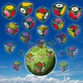 Flower cube — Stock Photo