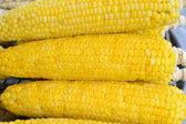 Corn pattern — Stock Photo