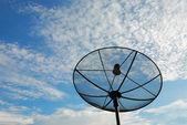 Satellite disc — Stock Photo