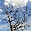 Tree againt blue sky — Stockfoto