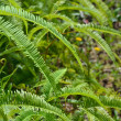Fern — Stock Photo #8166185