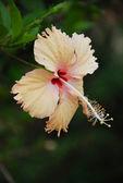 Thai flower — Stock Photo