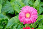 Blumengarten — Stockfoto