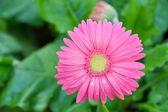 Jardín de flores — Foto de Stock