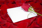 Red rose and a white card on the petals — Stock Photo
