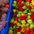 Colorful peppers - Foto Stock
