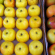 Yellow apples - Stock Photo