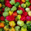 Colorful Chili Pepper - Stock Photo