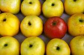 Rows of apples — Stock Photo