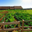 Foto de Stock  : Vegetable farm