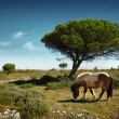 Pony Pasturing — Stock Photo