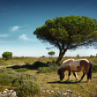 Pony Pasturing - Stock Photo