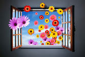 Window of Flowers — Foto de Stock