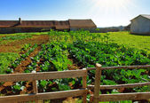 Vegetable farm — Stock Photo