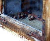 Outside the window — Stock Photo