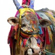 Royalty-Free Stock Photo: Indian cow decorated with colorful cloth, jewelry