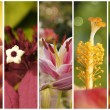 Collection of flowers close up with shallow depth of field — Stock Photo