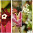 Collection of five flowers photos with shallow depth of field — Stock Photo
