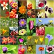 Collection of variety of flowers in different shapes, colors and — Stock Photo