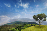 Tropical forest on mountains in summer — Stock Photo