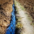 Stock Photo: Drip Irrigation in Farm