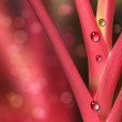 Red and pink plant with rain water droplets — Stock Photo