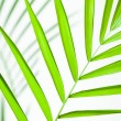 Tropical Leaf Closeup — Stock Photo #9492421