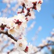 Blossom Branch — Stock Photo #9660787