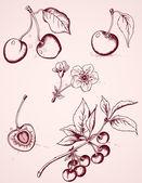 Hand drawn vintage cherry — Stock Vector