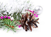 Christmas background with fir branch — Stock fotografie