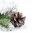 Christmas background with pine cone — Stock Photo