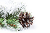 Christmas background with pine cone — Stok fotoğraf