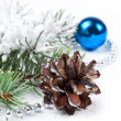 Pine cone and fir branch — Stock Photo
