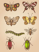 Vintage insects — Vector de stock