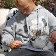 Boy with rabbit — Stock Photo